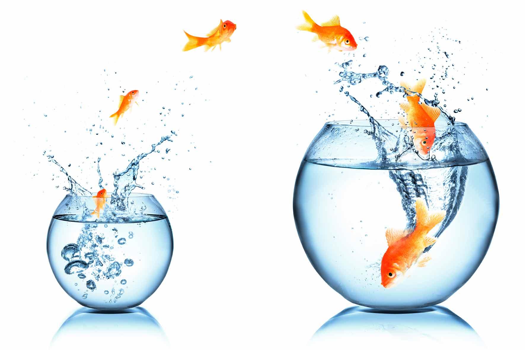 La gestió del canvi: clau d'èxit en la transformació